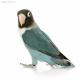 老鸟宝盒软件下载v1.0