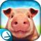 小猪模拟器官方下载v1.1.2