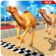 骆驼模拟器游戏下载v1.2