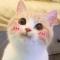 猫咪眼里的世界软件下载v1.0